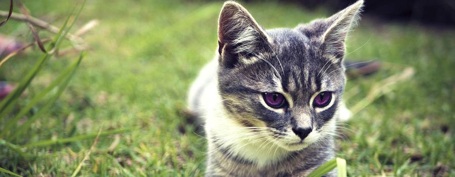 Katzenschwemme: Nicht nur Maikätzchen sind ein Problem