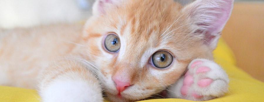 Gewinnspiel: Mai-Kätzchen – Abenteuer auf vier Pfoten