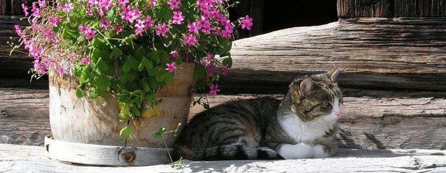 So kommt Ihre Katze fit durch den Sommer