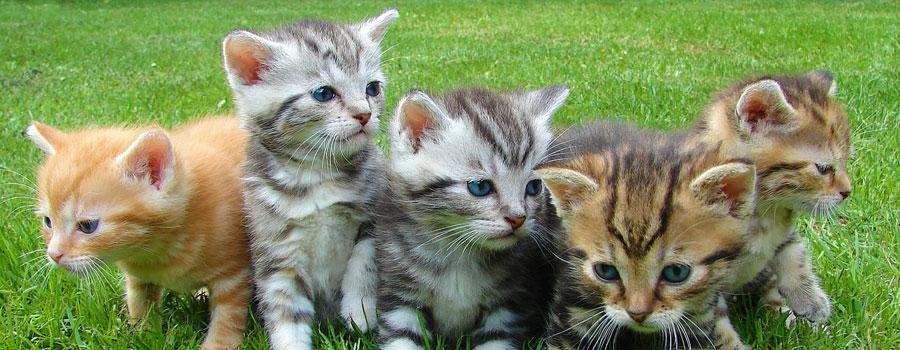 Kittenpflege - so füttern Sie Ihr Kätzchen richtig