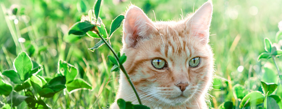Gewinnspiel: Lieben mich meine Katzen? - Eine Recherche