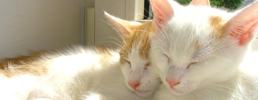 Gewinnspiel: Wovon Katzen träumen