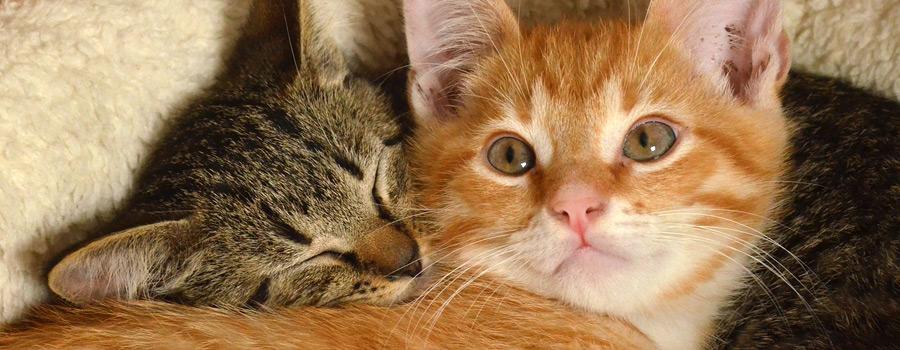 Am 8.8. Ist Welt Katzen Tag U2013 VIER PFOTEN Weiß, Was Katzen Mögen