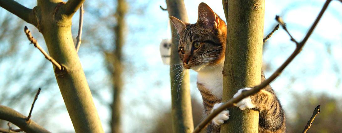 Pfotenstrecke: 10 auf Bäumen kraxelnde Katzen