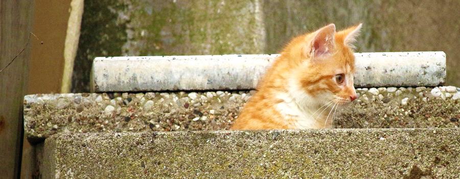 Gewinnspiel: Die Katzen von Montmartr...