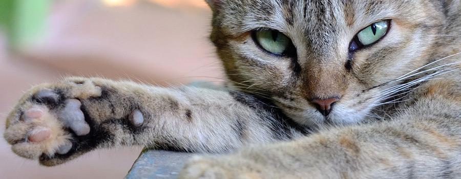 Pfotenstrecke: 10 Katzen zeigen Pfote