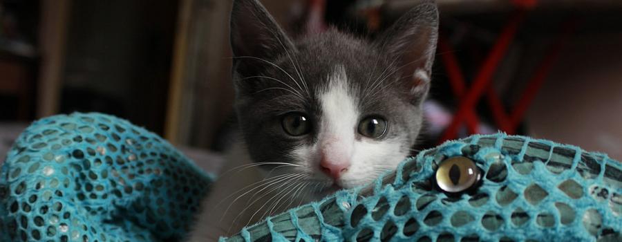 Glückliche Katzen - 5 Verwöhntipps für Ihre Samtpfote