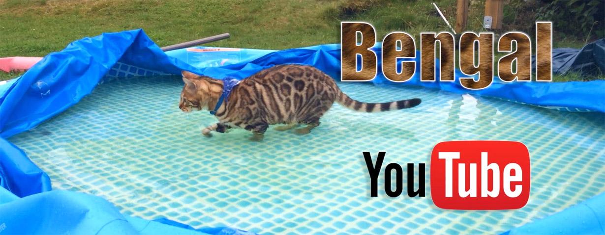 Wasserratten - oder: Katzen, die Wasser lieben