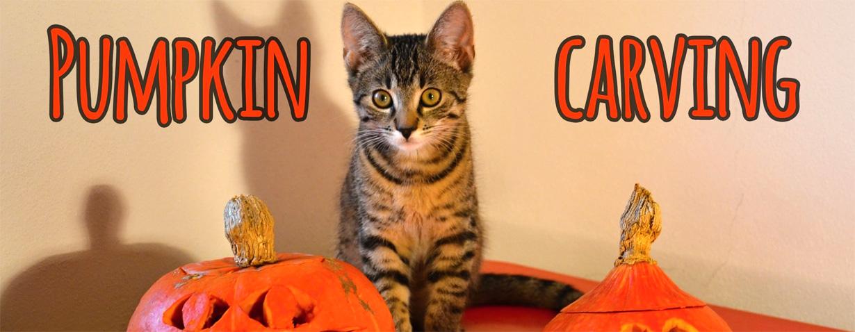 Katzen Halloween