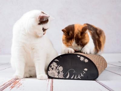 "Kratzbrett ""Le Pain"" von cat-on"