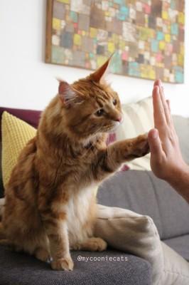 Louie - Mycooniecats