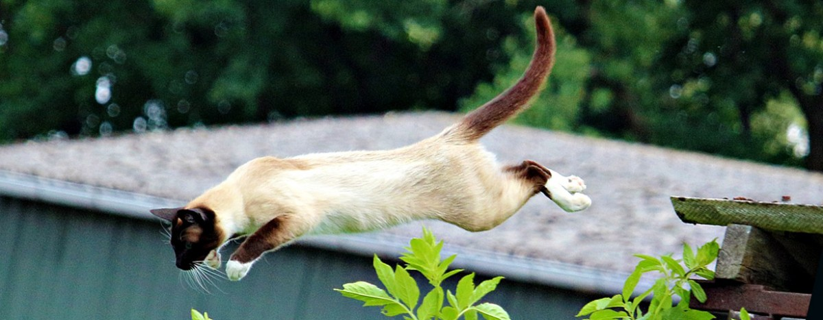 Pfotenstrecke: 10 Katzen auf dem Sprung
