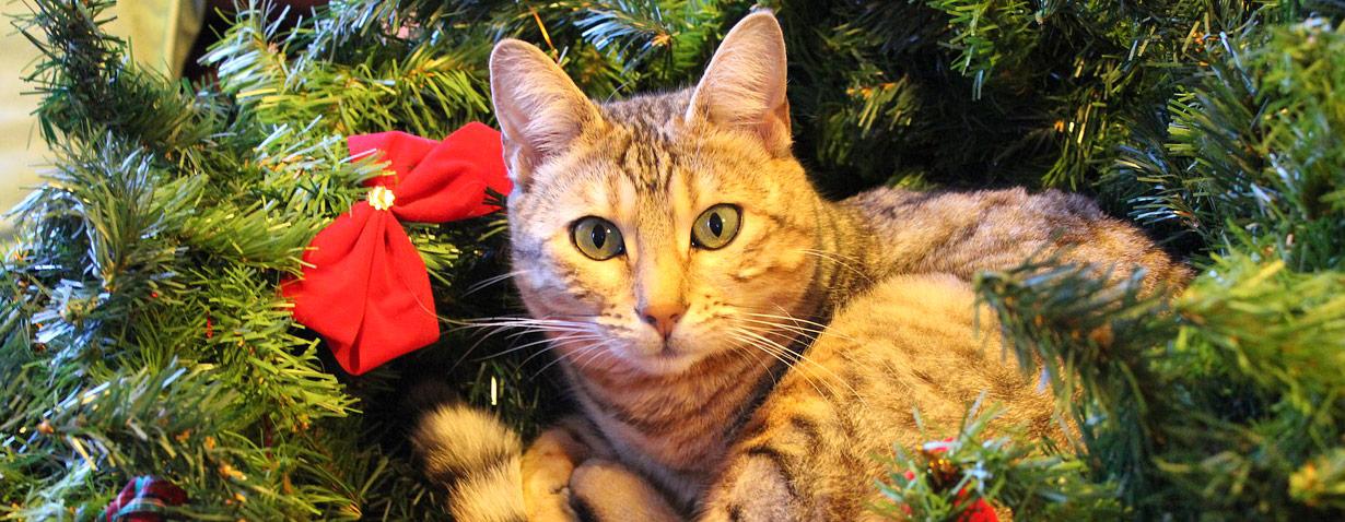 Ein Tier ist kein Geschenk – Vierbeiner gehören nicht unter den Weihnachtsbaum!