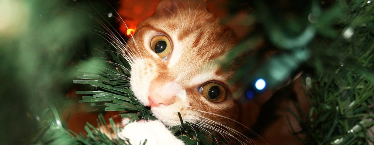 Weihnachten mit Katze - oder: Na das ist ja mal wieder eine tolle Bescherung!