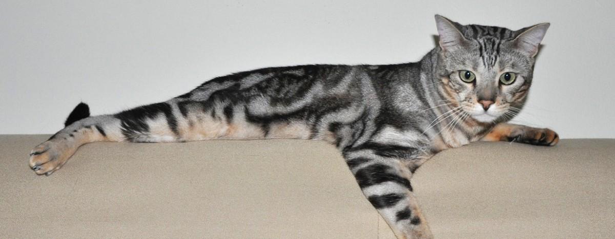 Pfotenstrecke: 10 Katzen auf dem Sofa