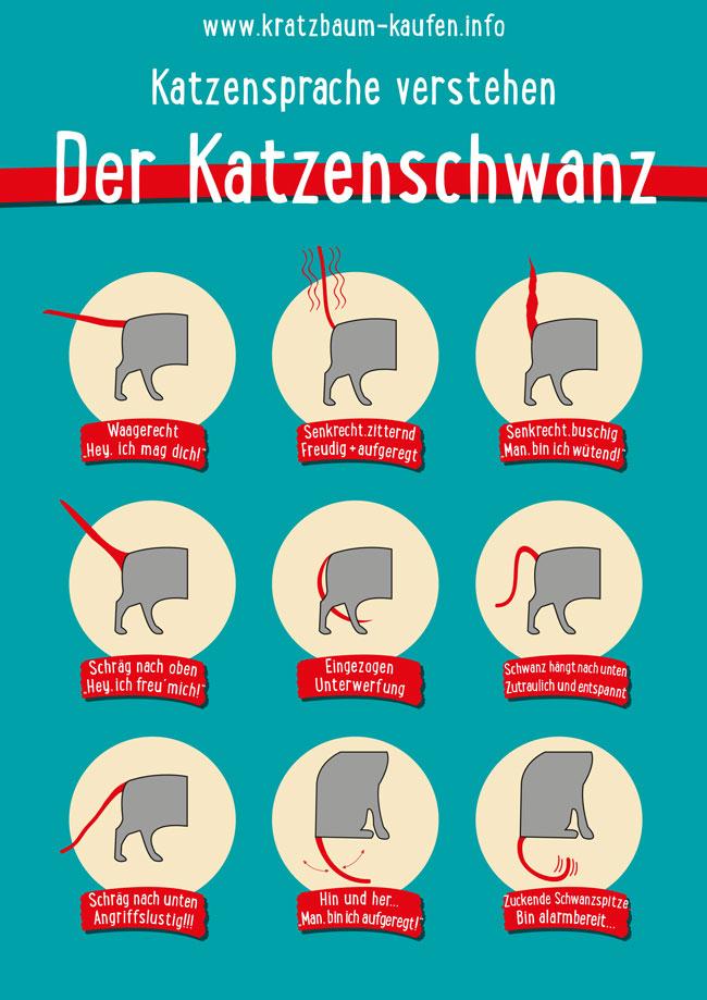 So wichtig ist der Katzenschwanz | Katzen.de