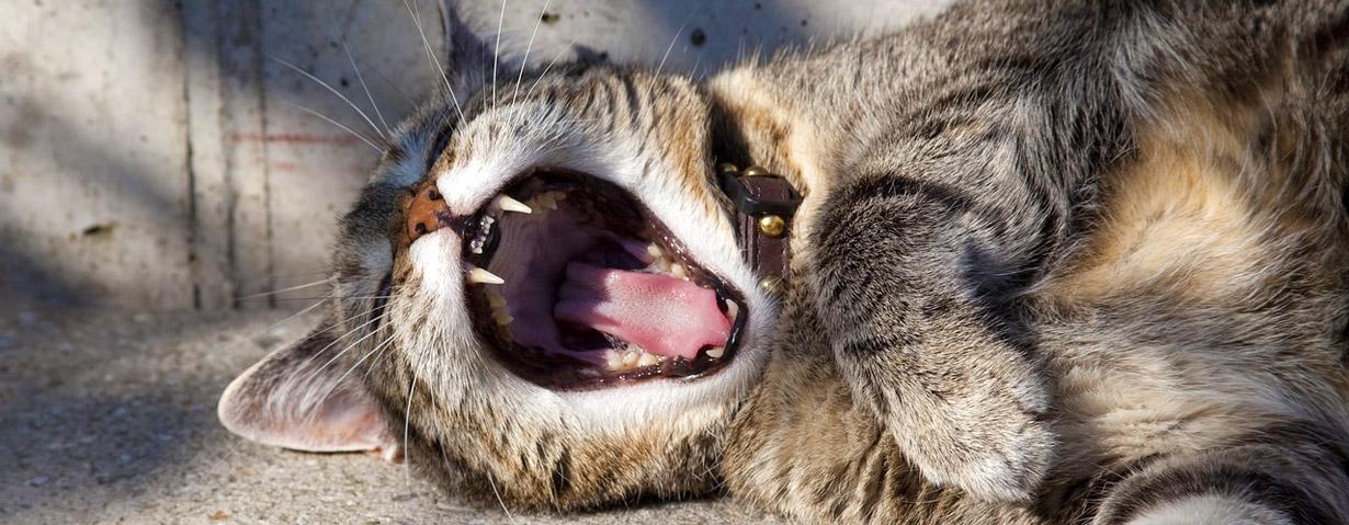 """""""Puh, du hast Mundgeruch!"""" - Zahngesundheit bei Haustieren ist wichtig"""