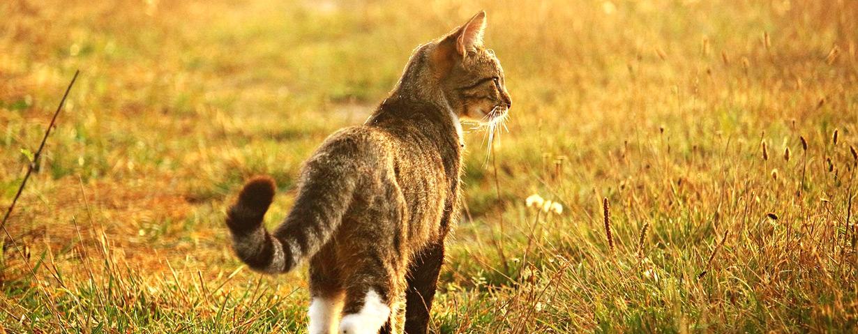 So wichtig ist der Katzenschwanz