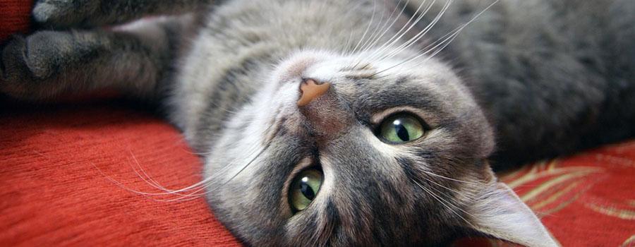 Naturprodukte für Ihre Katze