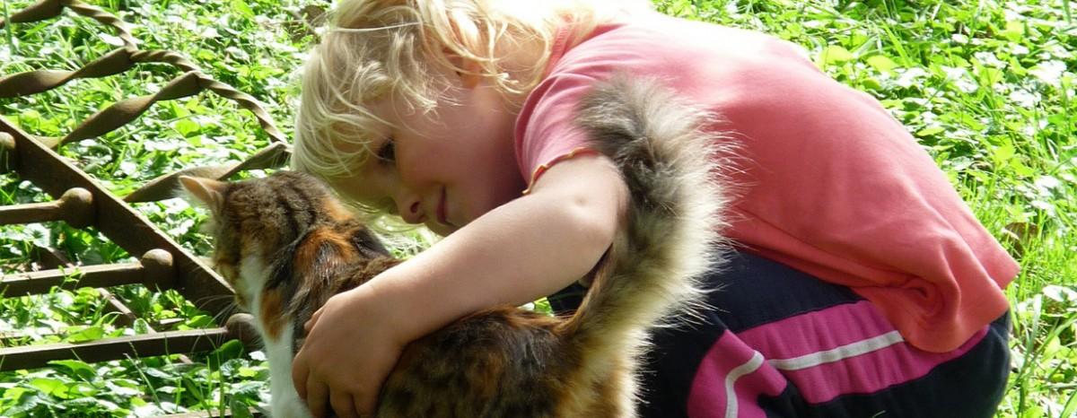 Mein Kind wünscht sich eine Katze – Tipps zum Umgang