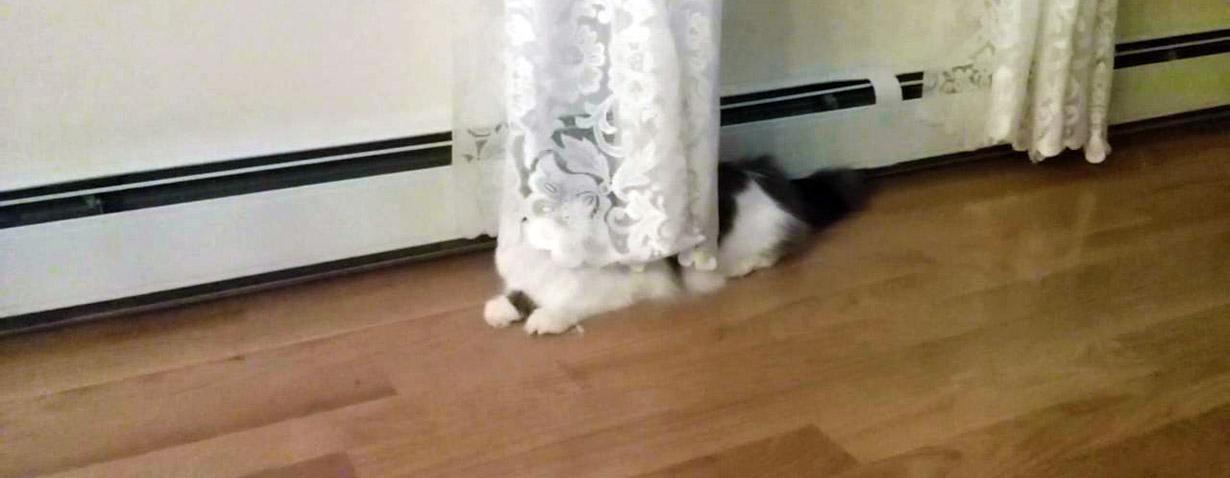 Du siehst mich nicht! - Wenn Katzen sich verstecken…