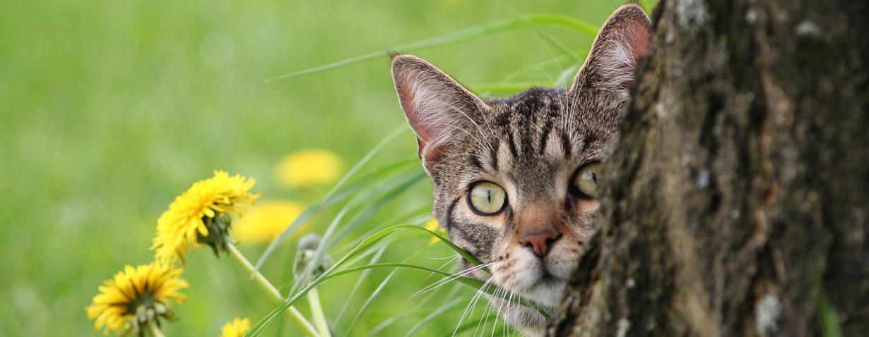 Pfotenstrecke: 10 neugierige Katzen