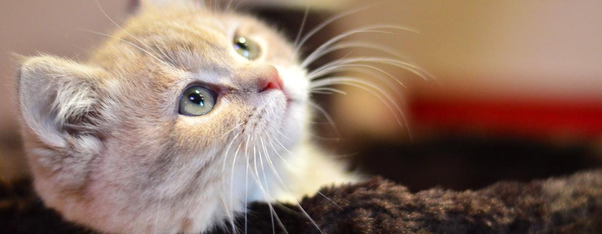 Das Katzenklo - Tipps für Einsteiger und Fortgeschrittene (Teil 2)