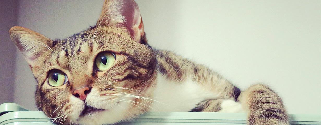 Das Katzenklo - Tipps für Einsteiger und Fortgeschrittene (Teil 1)