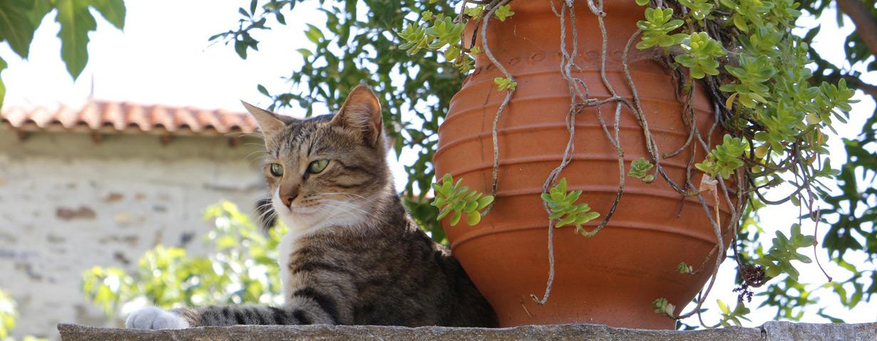 Dänemark: Urlaub mit Katze
