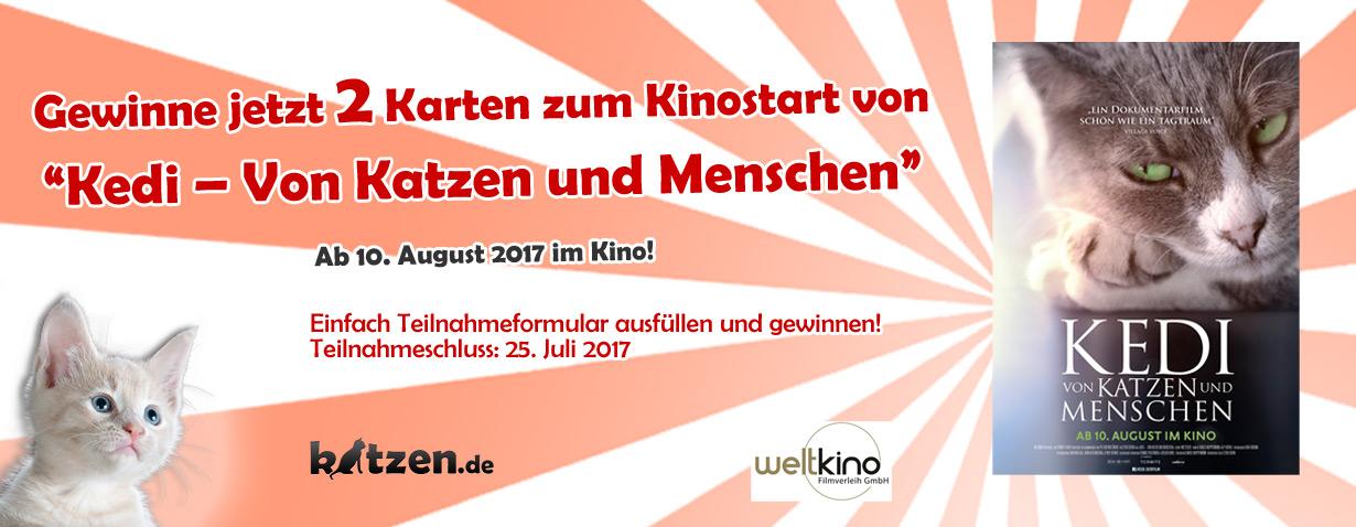 Gewinnspiel: KEDI – Von Katzen und Menschen (Kinostart: 10. August 2017)