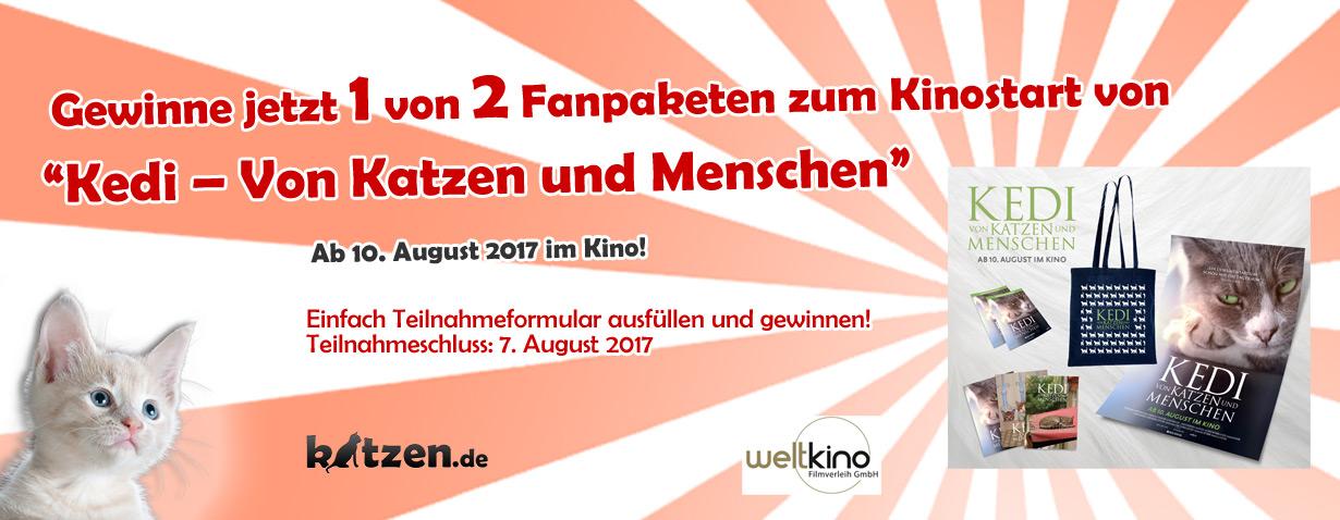"""Weltkatzentag-Gewinnspiel: Fanpakete zum Kinofilm """"KEDI – Von Katzen und Menschen""""!"""
