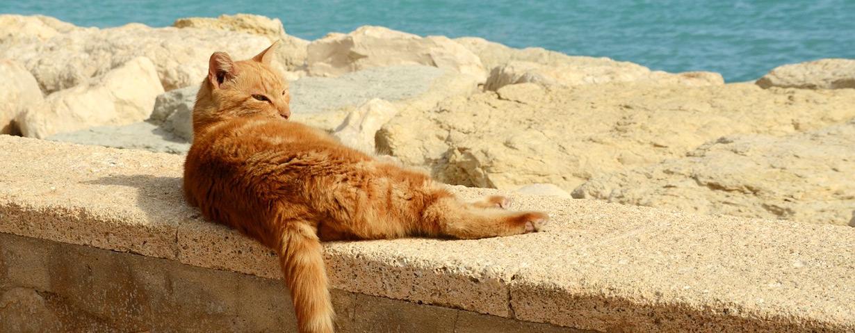 Pfotenstrecke: 10 Katzen beim Sonnenbad