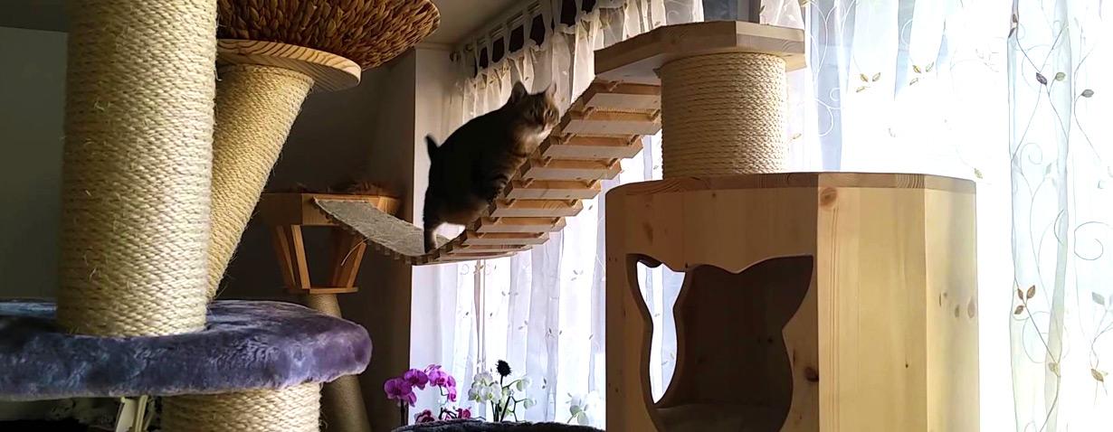 Katzen und ihre Kratzbäume…
