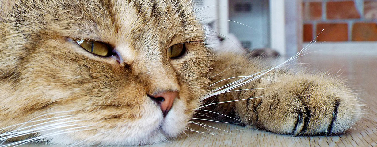 Haustier mit Demenz – Was Halter nun beachten sollten