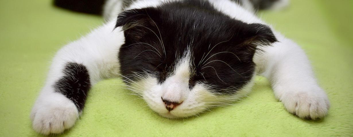 Pfotenstrecke: 10 faule Katzen