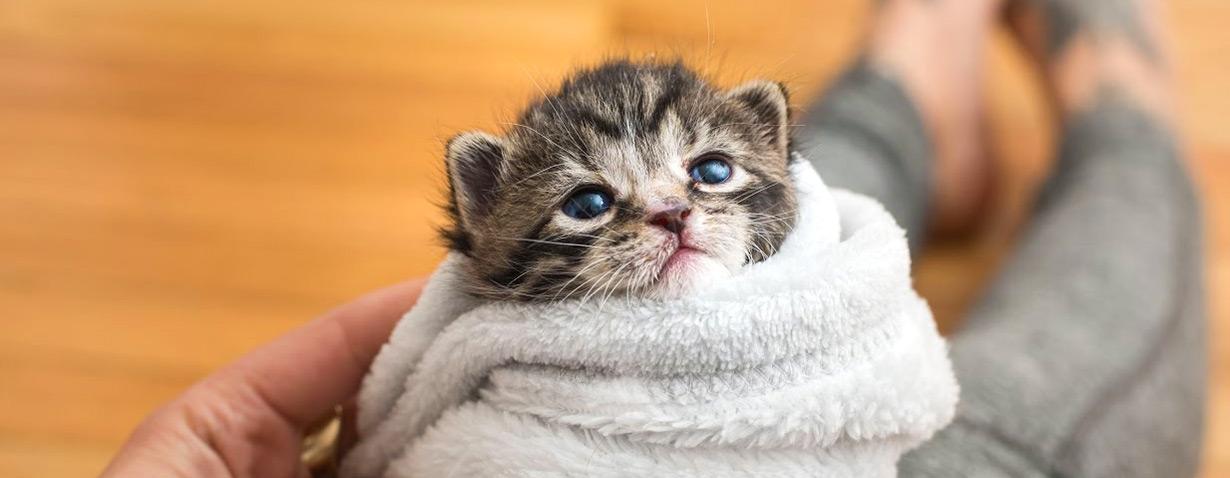 Süße Kitten aus dem Netz