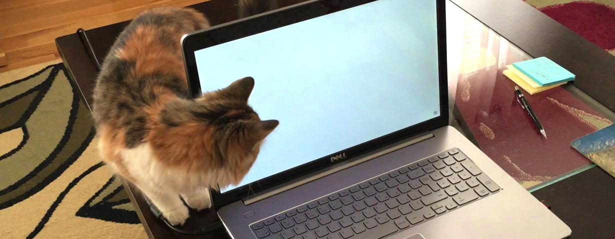 Katzen am Laptop