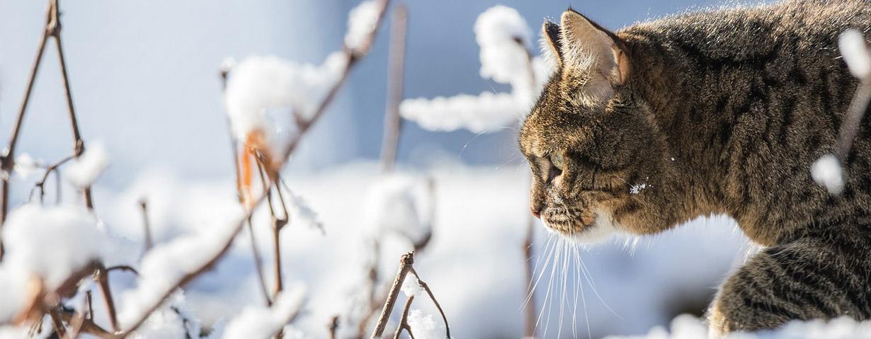 Pfotenstrecke: 10 Katzen im Schnee