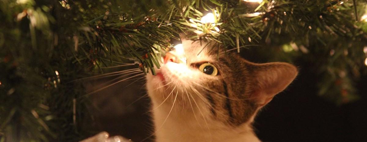 http://www.katzen.de/magazin/tiere-gehoeren-nicht-unter-den-weihnachtsbaum/