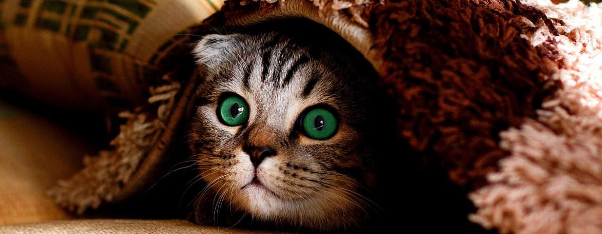Tierische Angst vorm Feuerwerk