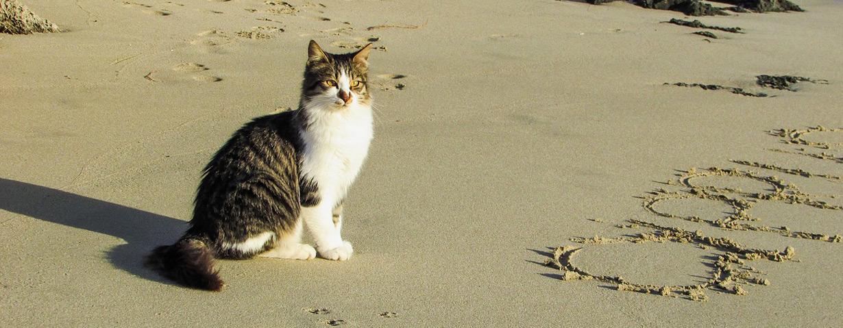 Pfotenstrecke: 10 Katzen, die Urlaub am Strand machen