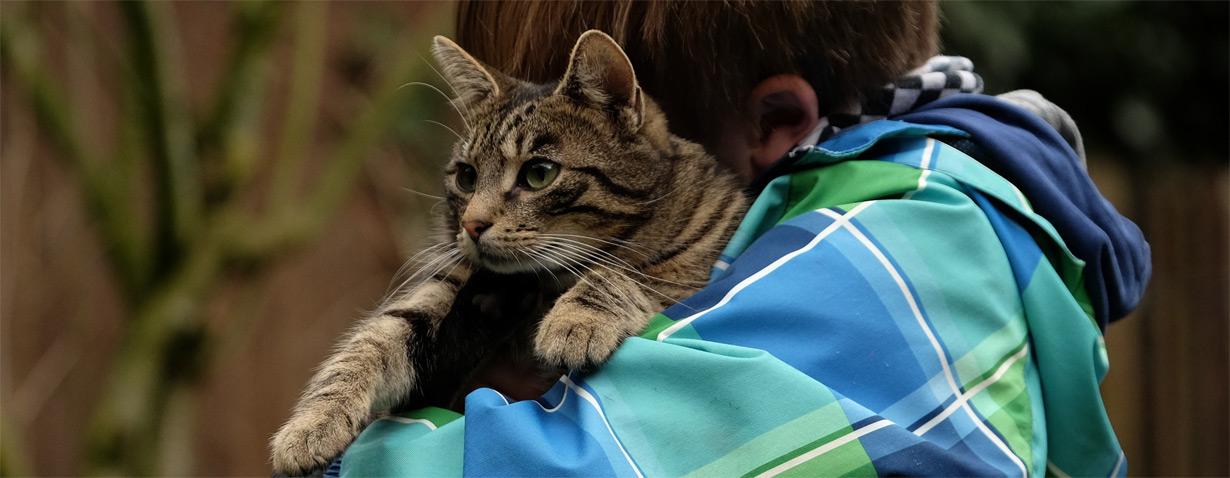 Mehr als 80.000 Tiere gehen im Jahr verloren – TASSO mahnt zur Registrierung