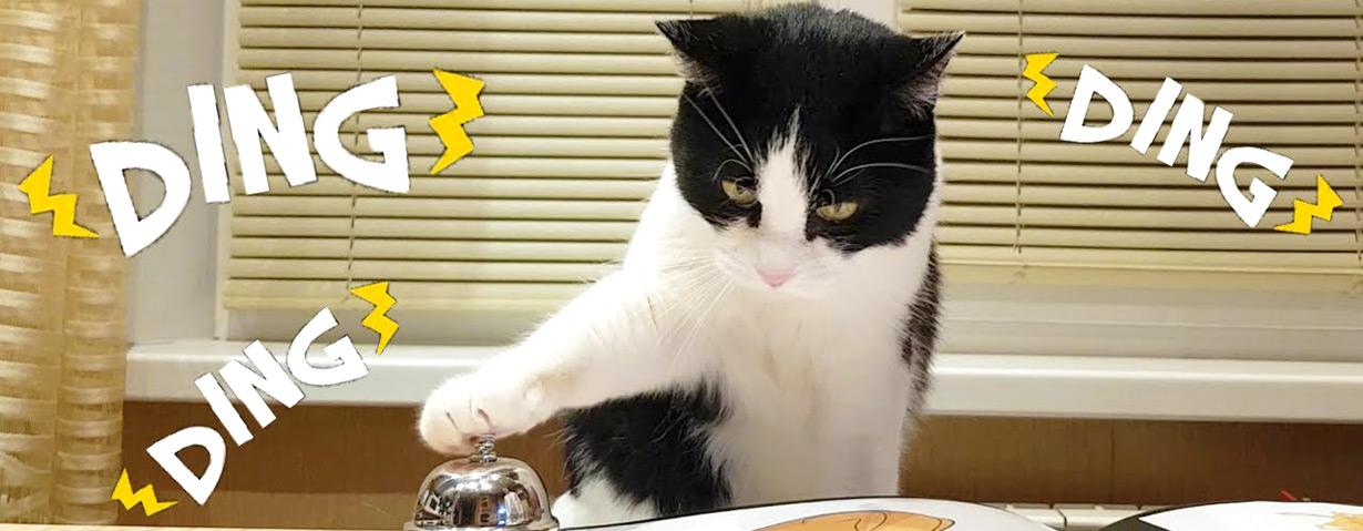 Kulinarische Katzen