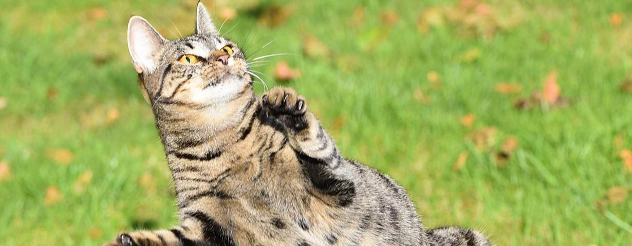 Alles für die Katz': Spiel, Spaß und Information mit der Katzenwelt von Bayer