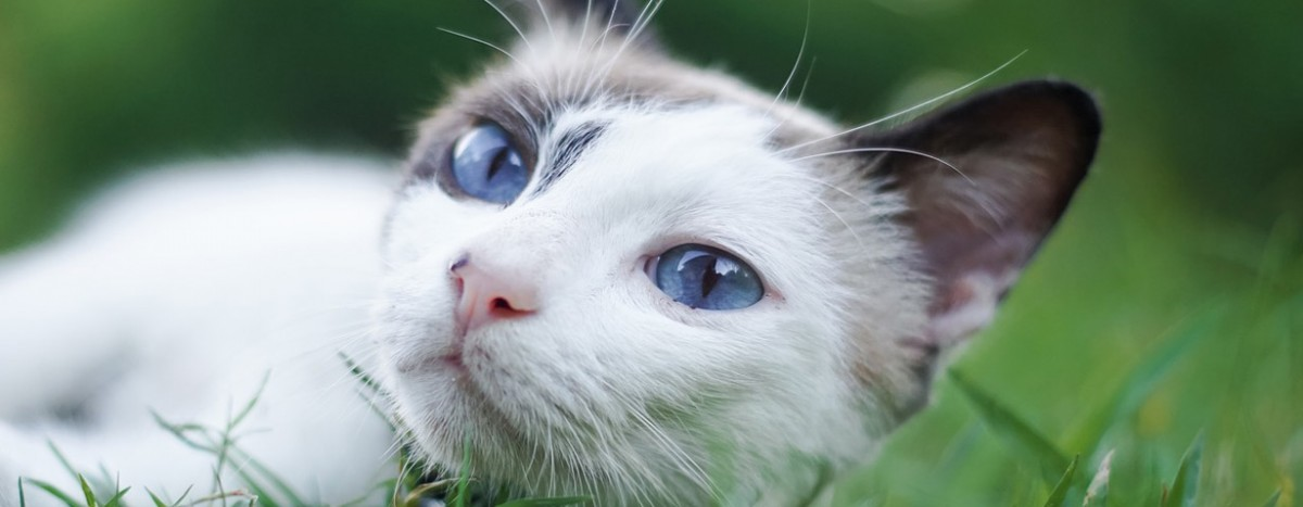 Hoher Blutdruck auch für Katzen gefährlich