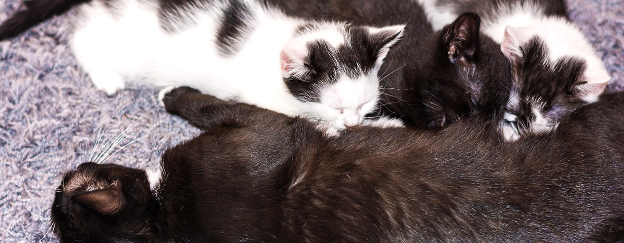 Würmer durch die Muttermilch? So können Katzenwelpen geschützt werden