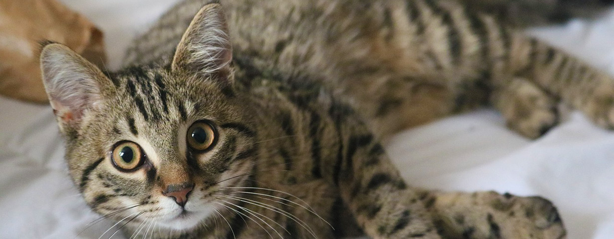 Urlaub geplant? So finden Tierhalter den perfekten Katzensitter – PETA-Expertin gibt Tipps