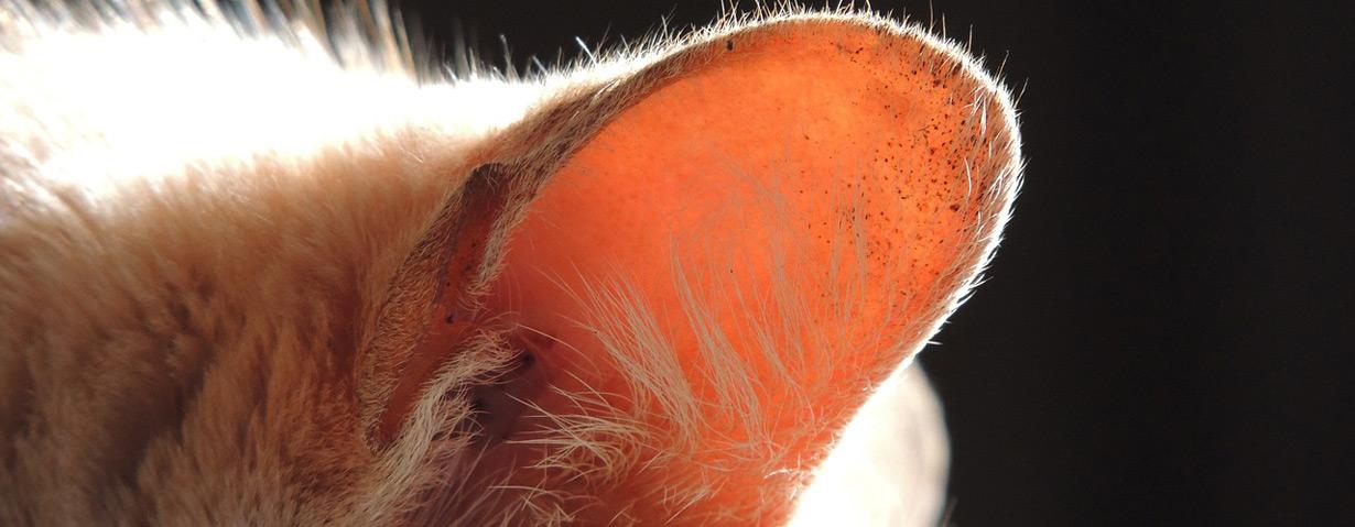 Milben – Angriff auf die Haut