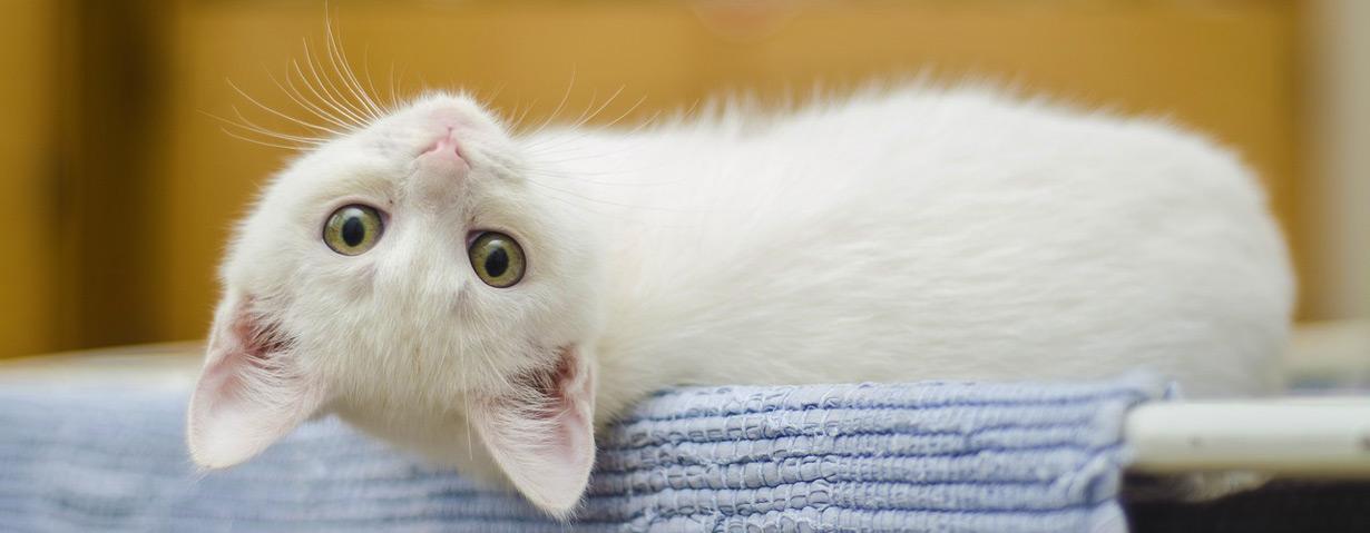 Pfotenstrecke: 10 weiße Katzen