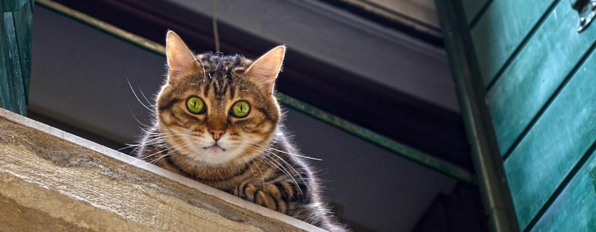 Wenn Miezi verschwunden ist – Die Suche nach entlaufenen Katzen ist Fleißarbeit